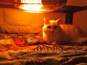 こたつ猫.jpg