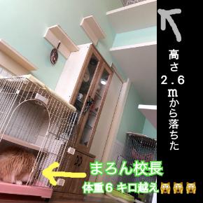 まろん飛び猫ダイブ.JPG