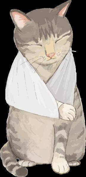 猫怪我イラスト.png