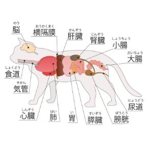 猫内臓イラストm無料.jpg