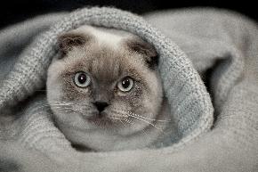 猫毛布.jpeg