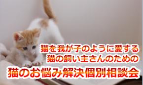お悩み相談会バナーのコピー.png