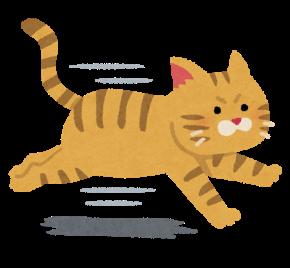 走る猫イラスト.png