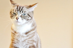 不機嫌な猫.jpg