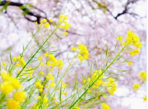 春のお花.png