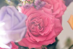 flowerFTHG1966_TP_V.jpg