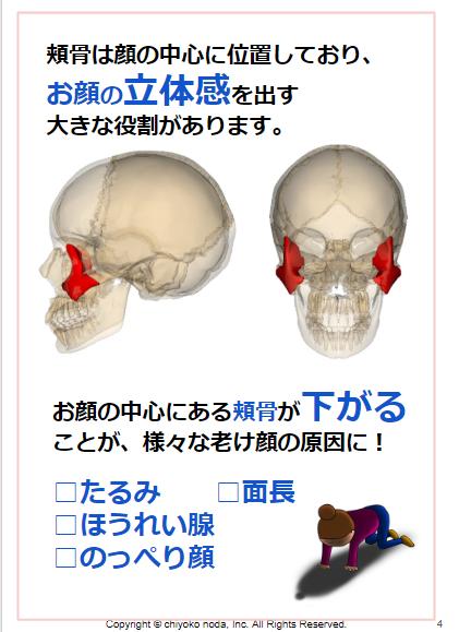 頬骨.png