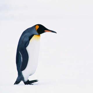 ペンギンちゃん.PNG