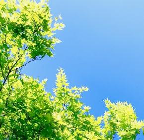 青空と新緑.jpg