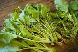 葉物野菜.jpg