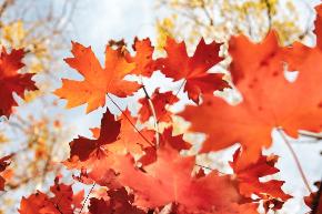 秋の紅葉.jpg